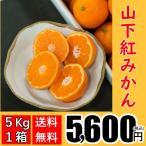 【送料無料】山下紅みかん(5kg×1箱)