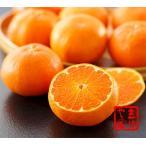 甘平約3kg(10〜13玉)詰