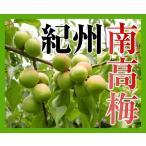 定番紀州南高梅(青梅・黄梅)1kg 【送料無料】