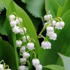ドイツスズラン「ボルドー」 芳香花 3.5号(10.5cmp) お得な5株まとめ買い