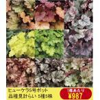 【まとめ買い】【宿根草】ヒューケラ品種名付き 5種5株