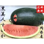 予約販売 送料無料 黒美人スイカ 2玉入り 静岡県産 計5kg〜7kg
