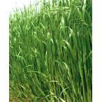 【エン麦(えんばく)】 雪印種苗 緑肥用ヘイオーツ 10kg ★送料無料 ★メーカー直送につき代引き不可