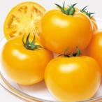 【トマト】タキイ交配 桃太郎ゴールド 1000粒 ★新タネは種子切替えの12月以降のお届けを予定