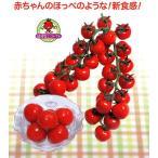 【ミニトマト】 渡辺採種場 「CFプチぷよ」(ぷちぷよ) 苗用ラベル100枚 ★代引不可