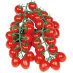【ミニトマト】 宇治交配(丸種種苗)  甘っこ(あまっこ) 小袋 ★新タネは種子切替えの12月以降のお届けを予定