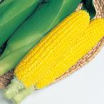 【とうもろこし】タキイ交配 おひさまコーン7 約60粒 ★新タネは種子切り替えの1月以降のお届を予定