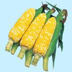 【とうもろこし】タキイ交配 カクテル84EX 約200粒 ★新タネは種子切り替えの1月以降のお届を予定