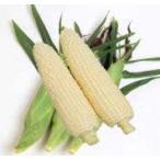 【とうもろこし】雪印 ピュアホワイト 2000粒 ★新タネは種子切り替えの1月以降のお届を予定