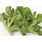 【葉菜種子】 武蔵野種苗園 アイスプラント 「プチサラ」 小袋コート種子 ★新タネは12月以降より