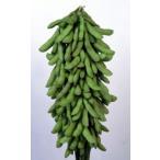 【枝豆】雪印種苗  極早生 「月夜音(つきよね)」 小袋 ★2月以降のお届け予定となります ★種子加工指定不可