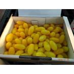豊橋産フルーツミニトマト あまえぎみ クレア(黄)1kg