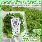 リーフレタス 120g / 水耕栽培・農薬不使用 / 採れたて直送便