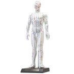 人体模型シリーズ けいけつくんII(WHO新規格対応経絡経穴鍼灸模型)