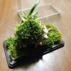 天然苔のテラリウム