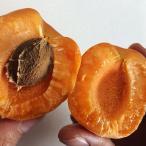 予約販売!長野県産 生食用あんずハーコット1.5kg(約20玉)【058】