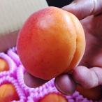 予約販売!長野県産 生食用あんずハーコット3.0kg(約40玉)【059】