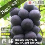 信州 中野 山ノ内 産地直送 巨峰 種あり 3〜5房 約2kg入り/箱 限定販売