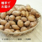 アピオス 種芋5個 山菜苗