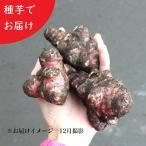 (20個) 岩手県産ムラサキキクイモ(生)種芋 20個 無農薬栽培/土付き/12月4日からお届け開始