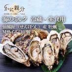 仙鳳趾(せんぽうし)産 牡蠣Mサイズ 10個 【冷蔵・生食用】