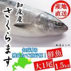 北海道 獲れたて便 鮮魚 さくらます 大 1尾 1.5kg 知床 斜里 港 水揚げ次第連絡 クレジットカード推奨 指定日不可 サクラマス 桜鱒 時期5月〜6月
