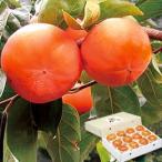 柿子 - 富有柿(2L×12玉) パンドラファーム メーカー直送につき代引・同梱・海外発送不可 創健社のウインターギフト