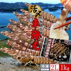 送料無料 車海老 特大 活〆冷凍 天草 車えび 1kg 熊本県産 獲れたて 生き活き 養殖場直送