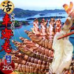 車海老 活【中M】天草 車えび 250g 熊本県産 獲れたて 生き活き 養殖場直送 送料無料