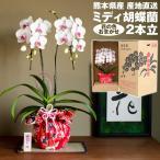 胡蝶蘭 敬老の日 ミディ 2本立 花の色おまかせ 産地直送 熊本県産 華てまり なかがわ農園 五蘭塾 洋蘭 ラン 洋ラン 花 常温便 産直 敬老の日