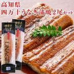 四万十うなぎ 蒲焼 2尾セット 鰻 国産 養殖 冷凍 高知県産 ウナギ