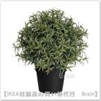 IKEA/イケア FEJKA 人工観葉植物22 cm ローズマリー