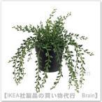 IKEA/イケア FEJKA 人工観葉植物20 cm グリーンネックレス