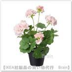 IKEA/イケア FEJKA 人工観葉植物38 cm ゼラニウム ピンク