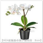 IKEA/イケア FEJKA 人工観葉植物38 cm Orchid ホワイト