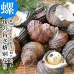 天然活きサザエ 3kg 18〜30個 大分県産 蠑螺 さざえ 栄螺