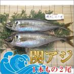 鮮魚 関アジ 約400gx2尾 一本釣り活け締め 関あじ 鯵 佐賀関漁業協同組合ブランド