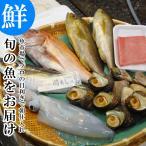 魚市場から直送! 旬の魚介 鮮魚 おまかせセット 極 関アジ または 関サバ が必ず入る 大分市 公設地方 卸売 市場