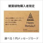 (観葉植物購入者様限定) メッセージカード / 立札