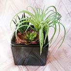 観葉植物 造花 リビング サボテン 寄せ植え 消臭 抗菌 UDD触媒 多肉植物 ミックスポット ミニ フェイクグリーン