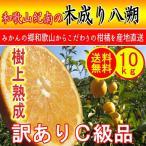 訳あり木成りはっさく 10kg (約33玉〜48玉入り) 送料無料 柑橘 高糖度 ノーワックス 防腐剤 不使用 みかん