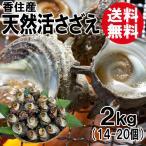 送料無料 香住産・天然活サザエ(約2kg/14〜20個)
