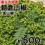 季節の山菜 鳥取/京都/兵庫産・実山椒(500g前後)[朝倉山椒]