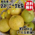 [訳あり]鳥取産・二十世紀梨[20世紀梨]5kg(16玉前後)[送料無料]