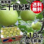 [贈答用]鳥取産・二十世紀梨[20世紀梨]L-10kg(36玉前後)[送料無料]