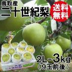 [贈答用]鳥取産・二十世紀梨[20世紀梨]2L-3kg(9玉前後)[送料無料]