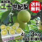 [贈答用]鳥取産・二十世紀梨[20世紀梨]4L-3kg(7玉前後)[送料無料]