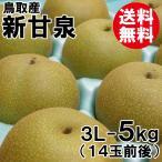 [贈答用]鳥取産・新甘泉3L-5kg(14玉前後)[送料無料]