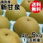 [贈答用]鳥取産・新甘泉4L-5kg(12玉前後)[送料無料]