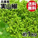 兵庫産・実山椒(約1kg)[送料無料]